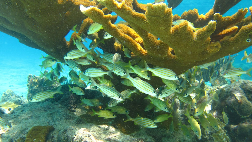 Foto 4 von 5 laden Underwater view of reefs and fish in Curacao