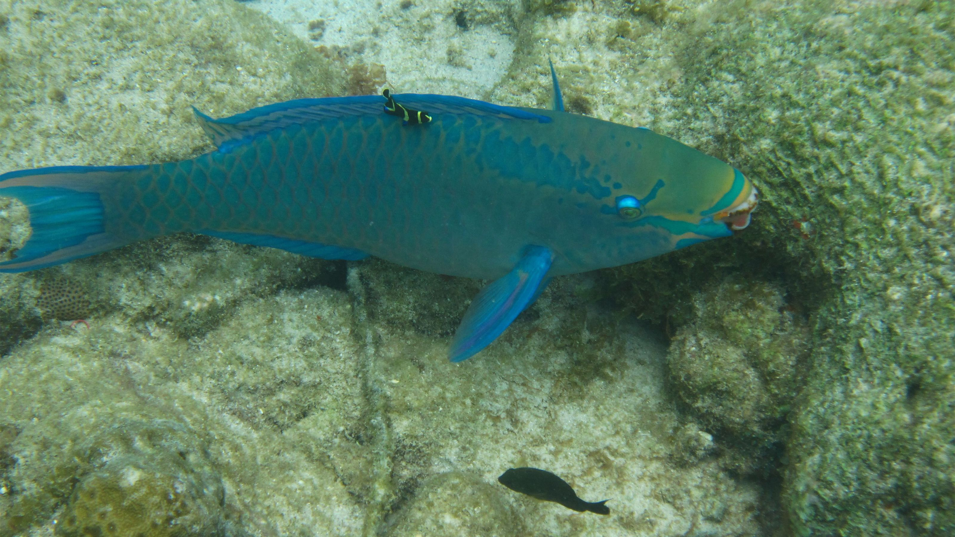 View of a fish in Curacao