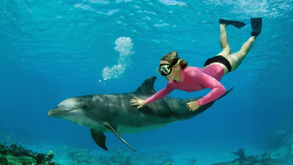 Woman free dives next to dolphin at Dolphin Academy Curacao