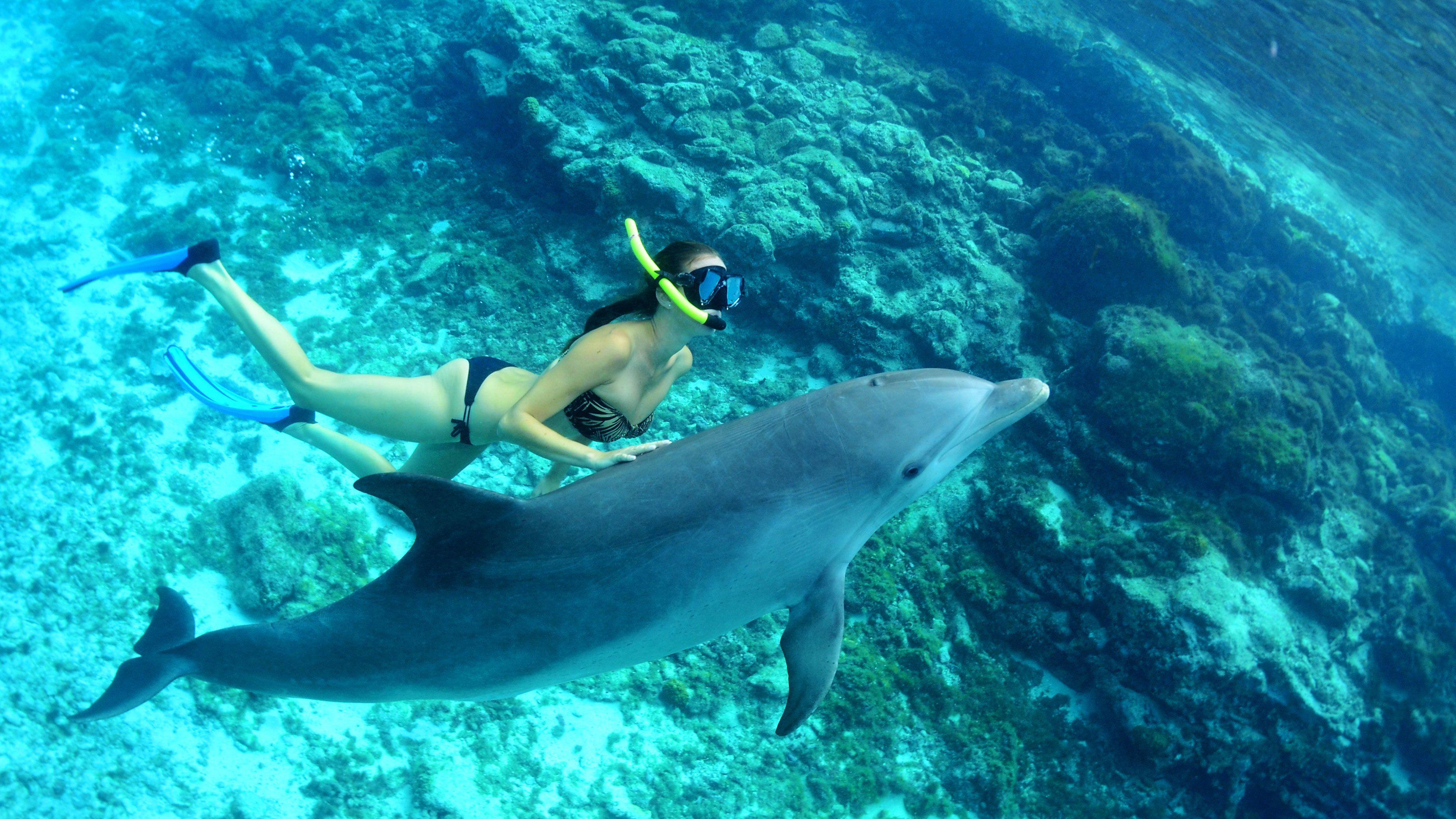 Snorkel & Swim with Dolphins