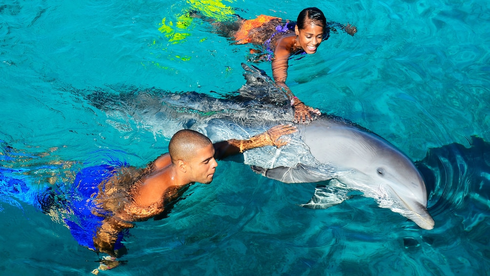 Couple swimming with dolphin at Dolphin Academy Curacao
