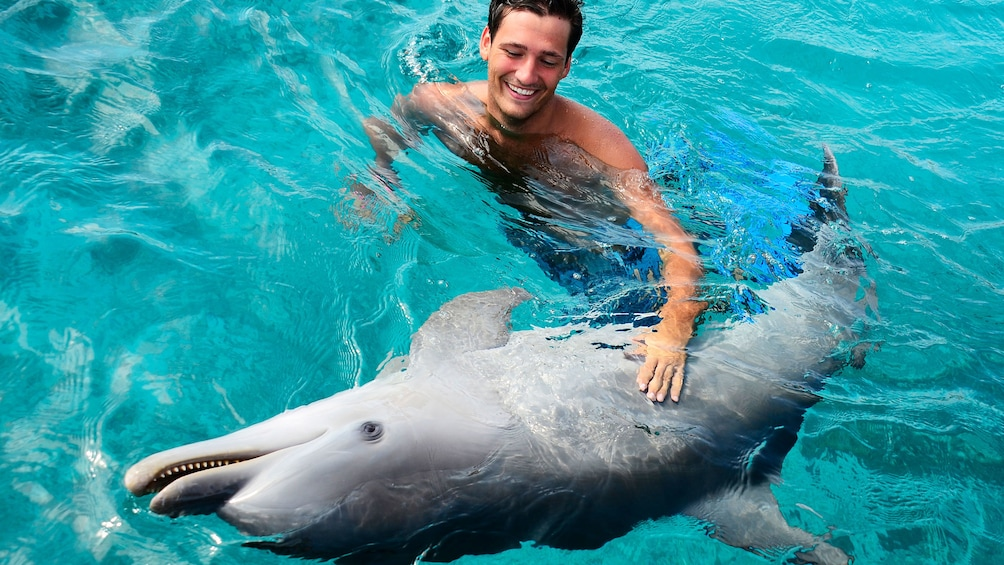 Man swimming with dolphin at Dolphin Academy Curacao