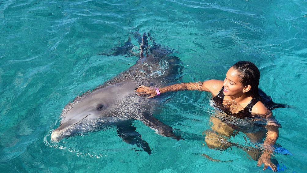 Woman swimming with dolphin at Dolphin Academy Curacao
