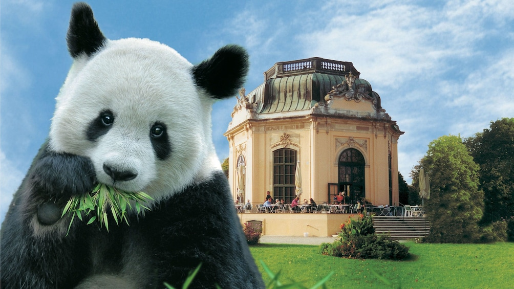 Foto 1 van 5. Panda bear and the the imperial breakfast pavilion at the Schoenbrunn Zoo in Vienna