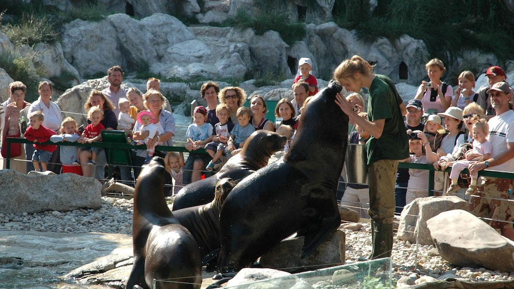 Foto 3 van 5. Animal trainer with sea lions during a demonstration for an audience at the Schoenbrunn Zoo in Vienna
