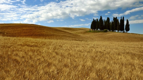 Country side on Siena and San Gimignano Full-Day Tour in Italy
