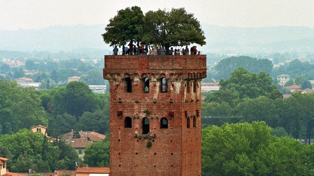 Foto 4 von 5 laden trees on brick buildings on Pisa and Lucca Full-Day Tour in Italy