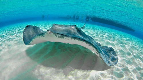 Stingray at the bottom of the ocean in Grand Cayman