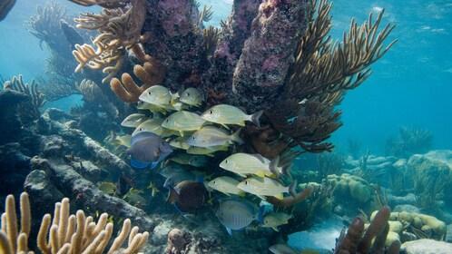School of fish swimming near a reef in Grand Cayman
