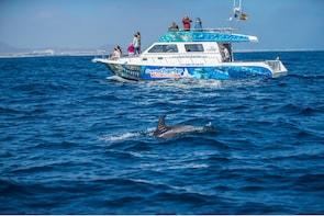 Cetaceans watching + Lobos island