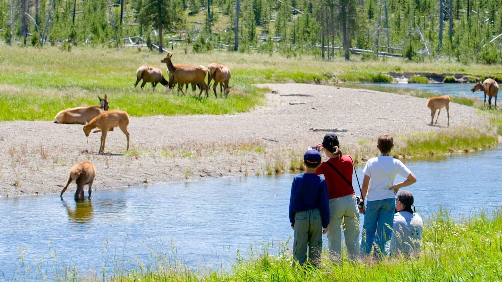 Show item 5 of 5. Family enjoys view of deer in front of them at Grand Teton National Park in Jackson Hole