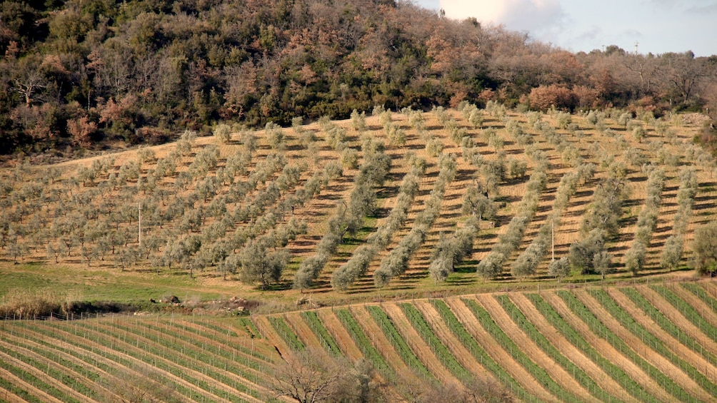 Foto 3 von 5 laden field on Tuscany Wine Tasting Tour in Italy