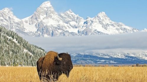 Scenic mountain and landscape view of Grand Teton National Park Tour