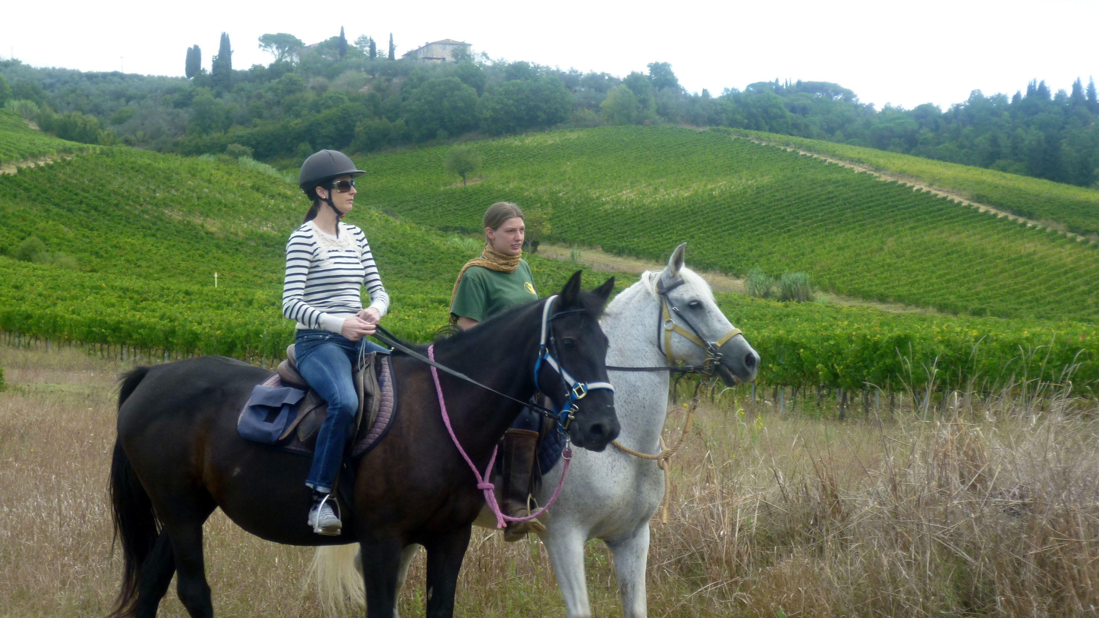 Horses in field in Tuscany in Italy