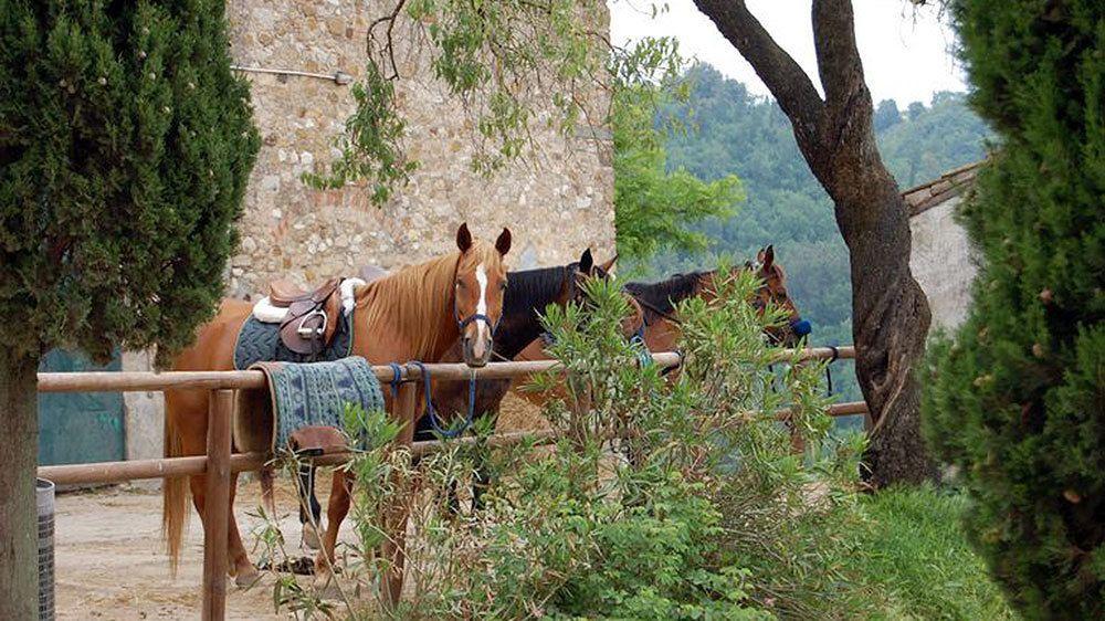 Horses in corral in Tuscany in Italy