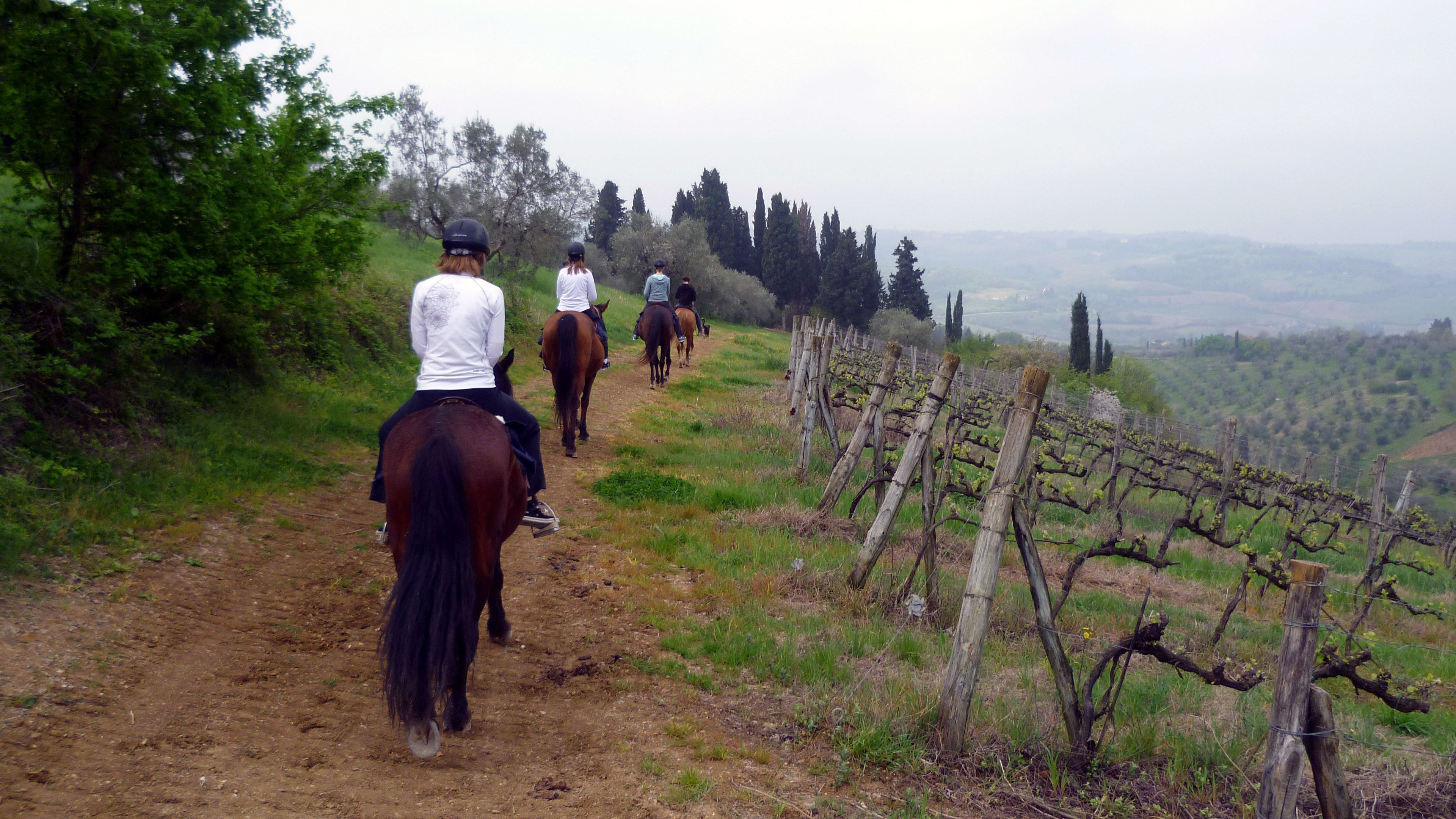 Horses on trail in Tuscany in Italy