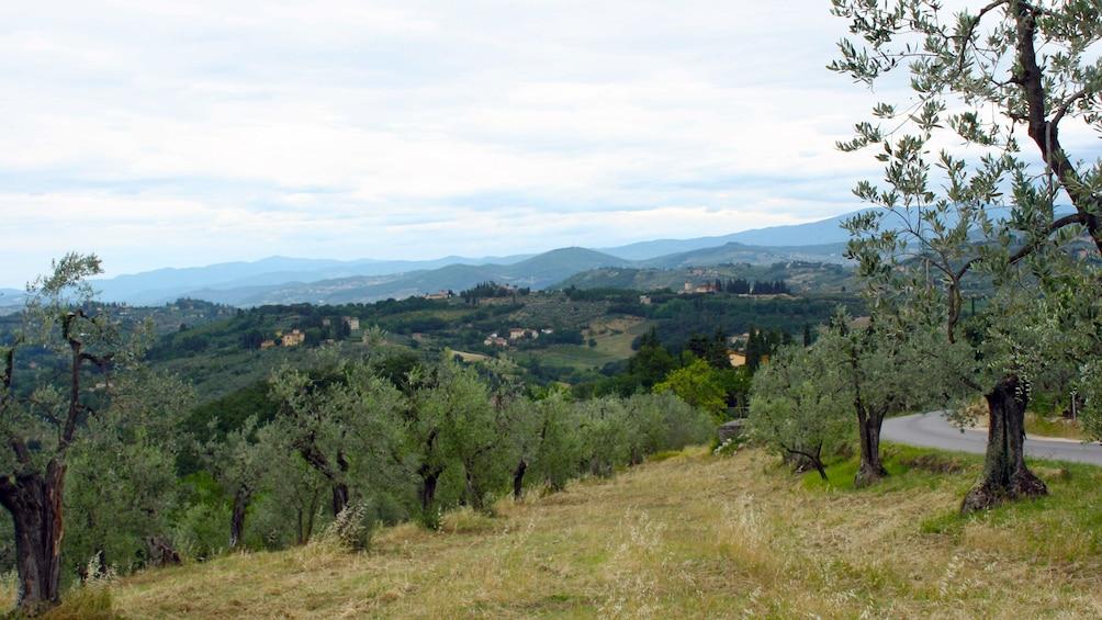 Apri foto 8 di 8. Vineyard view on Tuscany by Vespa tour in Italy