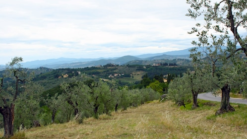 Vineyard view on Tuscany by Vespa tour in Italy