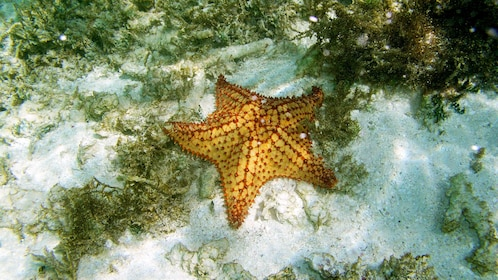orange starfish under water
