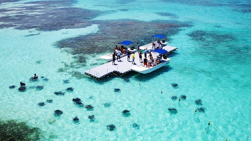 free floating dock surrounded by stingrays in Antigua