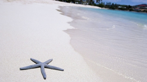 Sea star near the water on a sandy beach in St Lucia