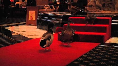peabody ducks1.jpg
