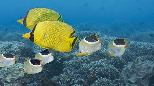 Colorful fish swimming along the coral reef in St Kitts