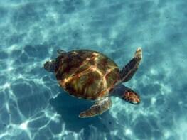 Snorkelling & Beach Safari