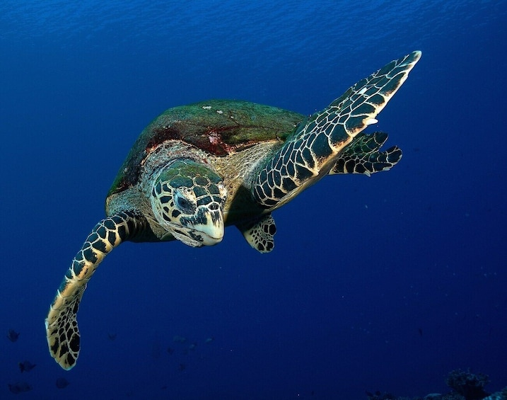 Show item 3 of 10. Turtles snorkeling at 7:30am