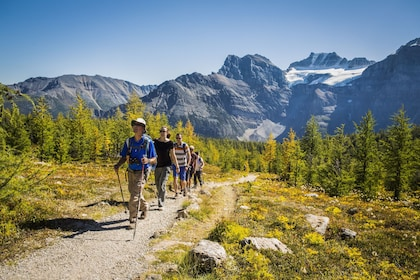 Signature Guided Hikes in the Canadian Rockies