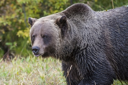 Banff National Park Evening Wildlife Safari