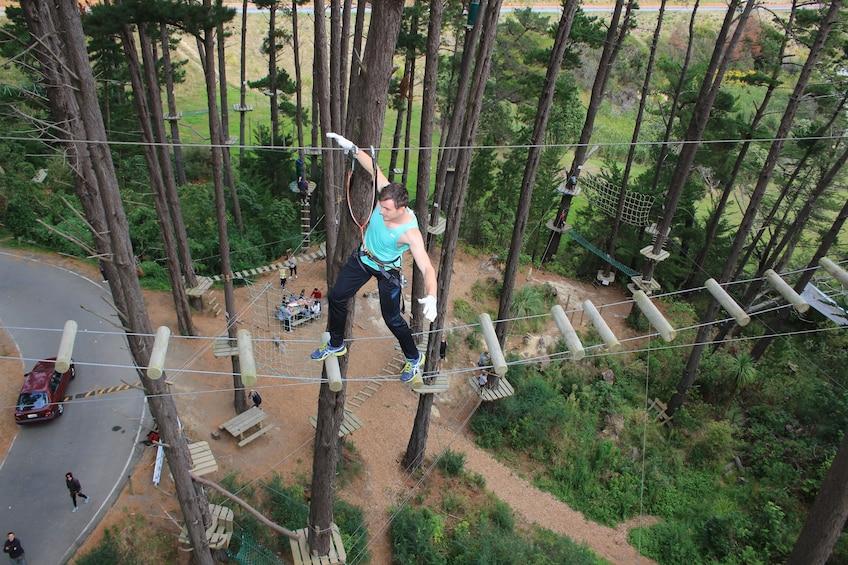 Show item 2 of 10. Adrenalin Forest Auckland Adventure Park