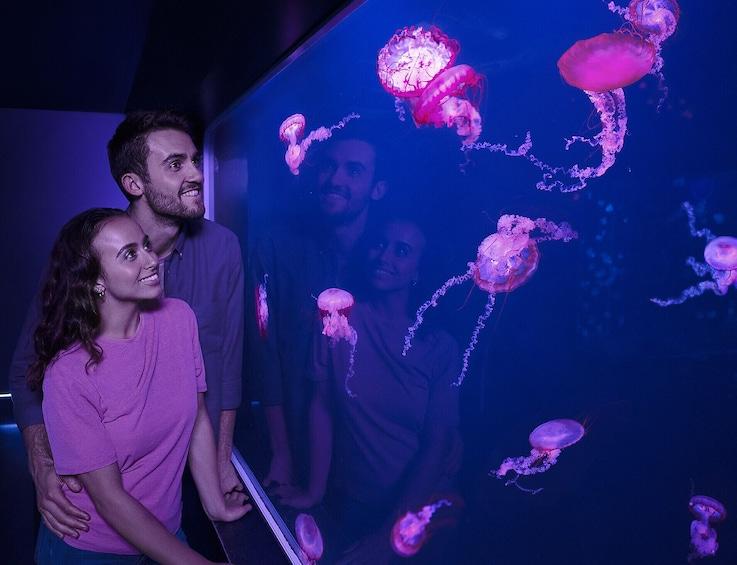 Carregar foto 8 de 8. SEA LIFE Arizona Aquarium Tickets