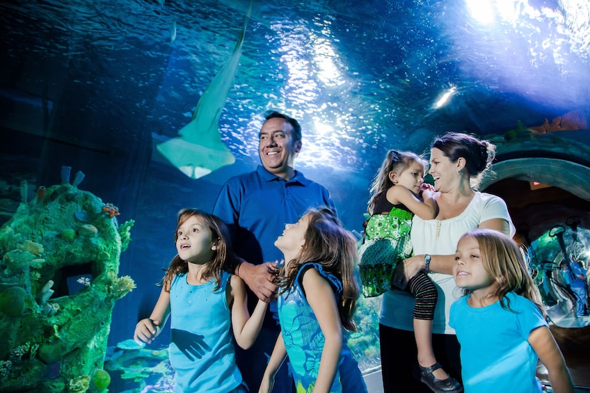 Show item 1 of 10. SEA LIFE Arizona Aquarium Tickets