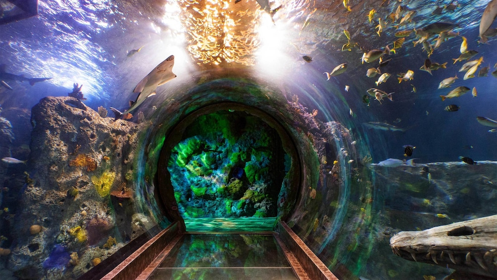 Show item 2 of 10. Underwater glass tunnel enables guests to view through the Sea Life Aquarium