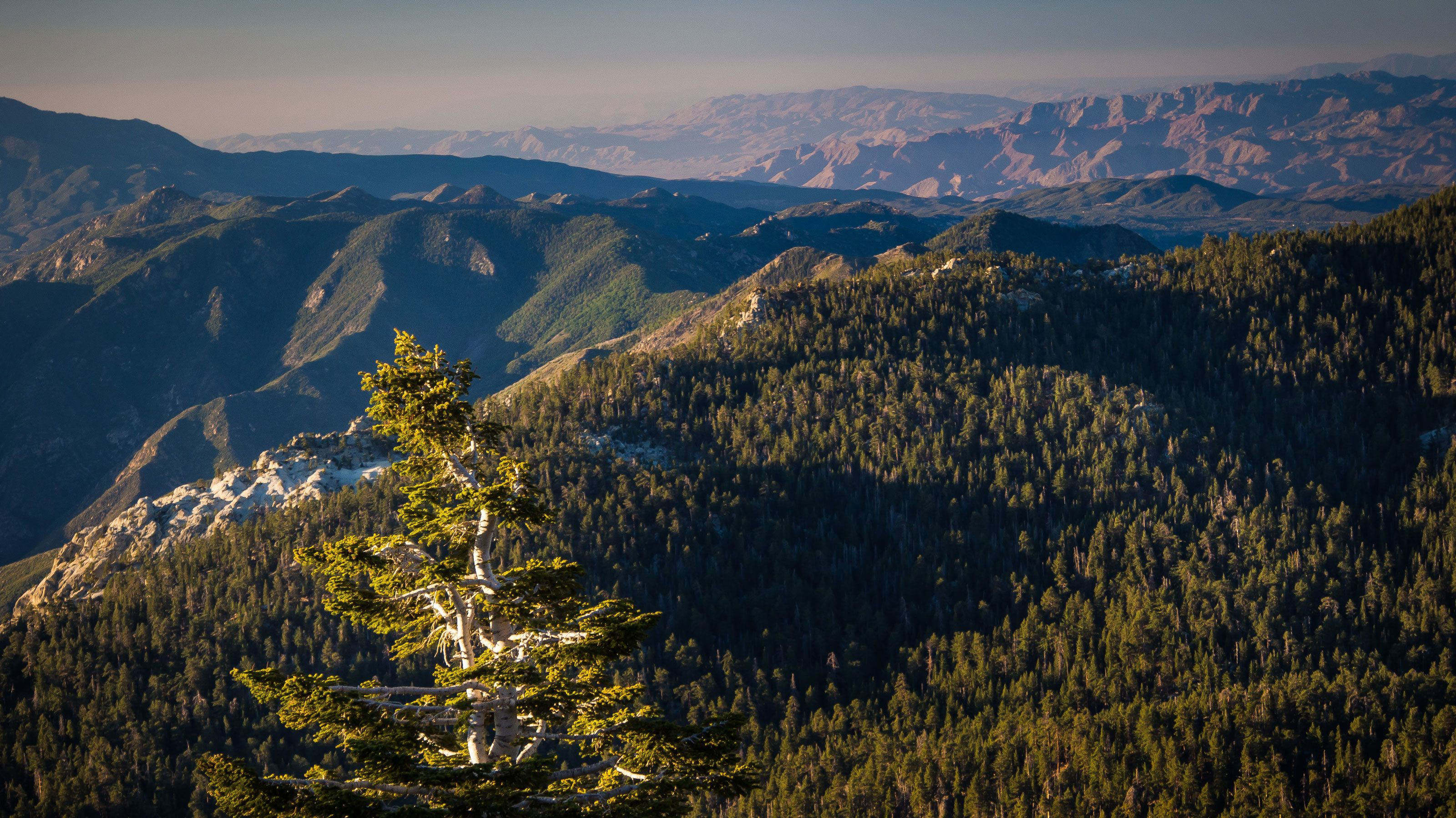 Aerial view of the forest and mountains of Mount San Jacinto State Park in California