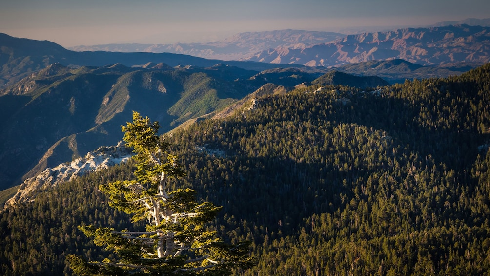 Indlæs billede 4 af 5. Aerial view of the forest and mountains of Mount San Jacinto State Park in California