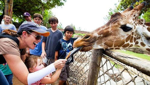 Woman and daughter feeding giraffe at zoo in Tucson