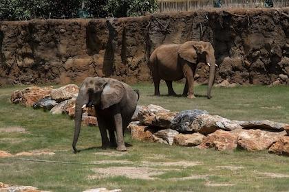 elephant_ZA_9455.jpg