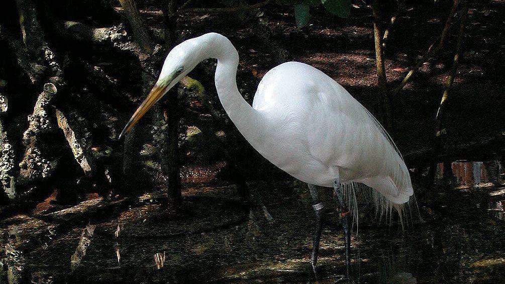 Bird within the Florida Aquarium