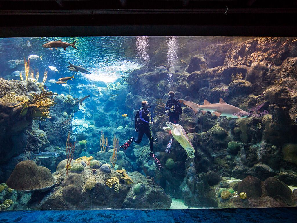 Dive Show at Panoramic Coral Reef Viewing Window.png