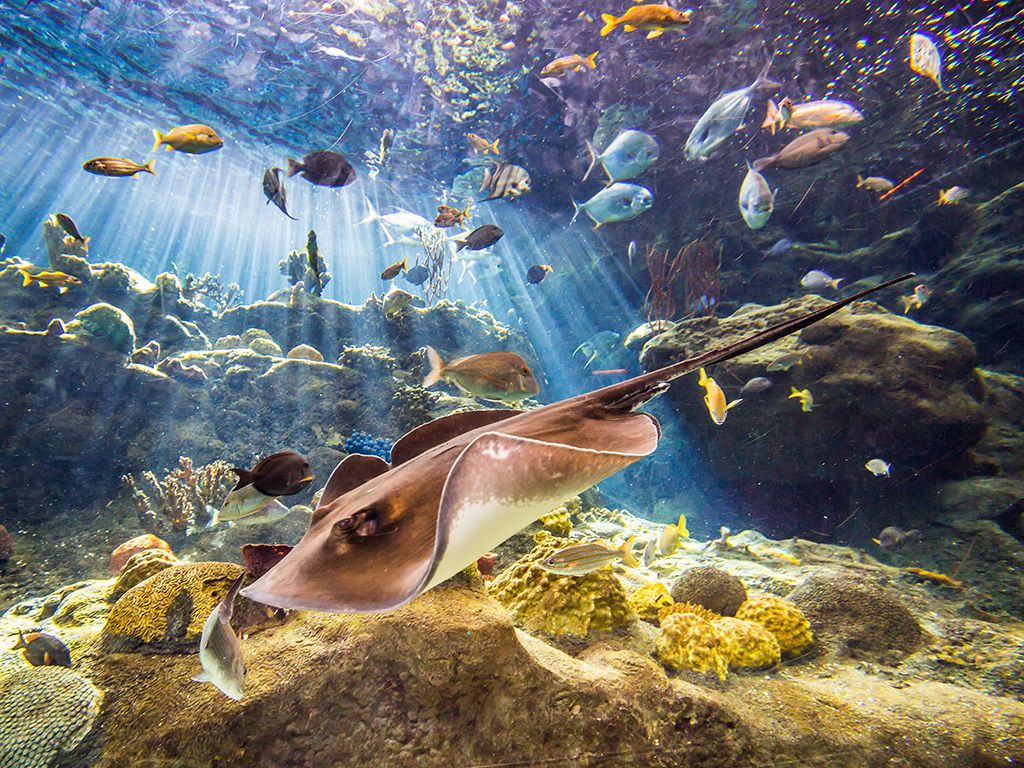 Stingray Coral Reefs.png