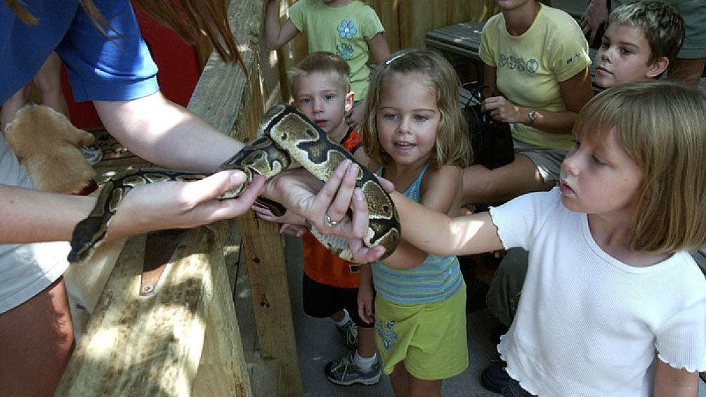 Boa constrictor being shown to children at the Florida Aquarium