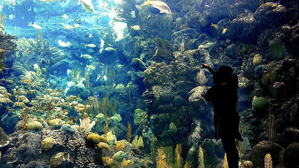 Marine life exhibit in the Florida, Aquarium