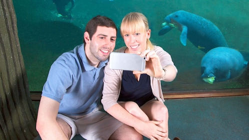 Man and woman take a picture next to manatees in aquarium