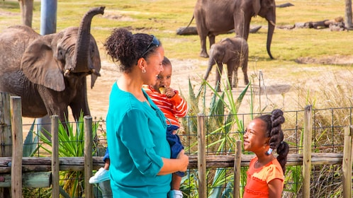 Family at Elephant exhibit at Zoo