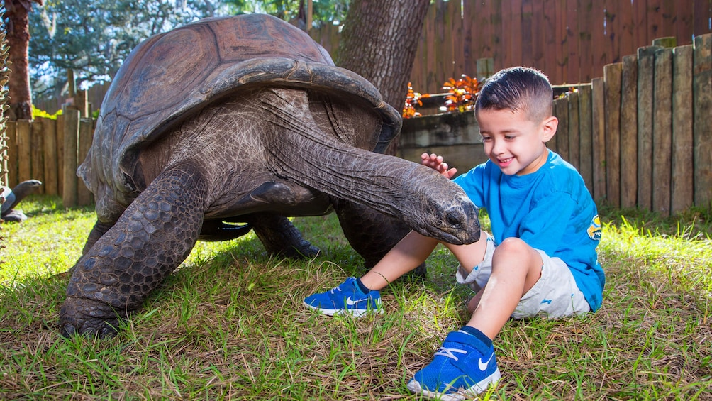 Show item 1 of 10. Little boy next to a large Tortoise