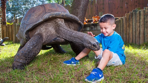Little boy next to a large Tortoise