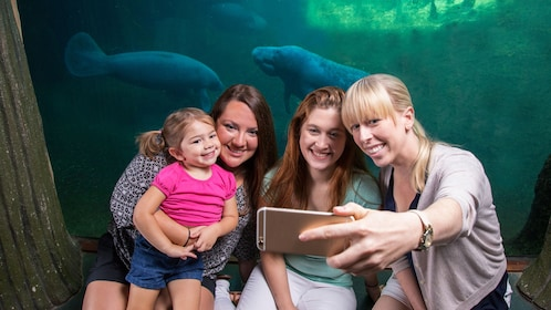 Women take a picture next to manatees in aquarium