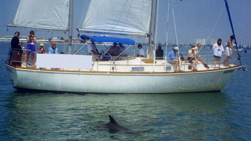 Show item 4 of 8. Tourists watching a dolphin swim by their sail boat